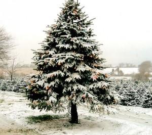 christmas_tree_09